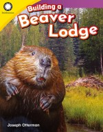 Building a Beaver Lodge