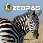 All About African Zebras