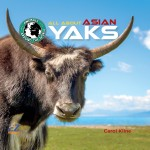 All About Asian Yaks