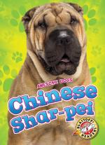 Chinese Shar-peis