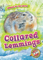 Collared Lemmings