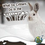 What Do Critters Do In The Winter?: Read Along or Enhanced eBook