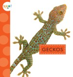 Geckos: Read Along or Enhanced eBook
