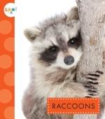 Raccoons: Read Along or Enhanced eBook