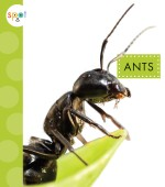 Ants: Read Along or Enhanced eBook