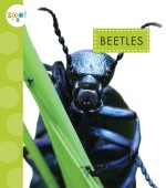 Beetles: Read Along or Enhanced eBook