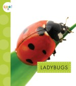Ladybugs: Read Along or Enhanced eBook