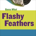 Flashy Feathers: Macaw: Read Along or Enhanced eBook