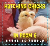 Hatching Chicks in Room 6: Read Along or Enhanced eBook